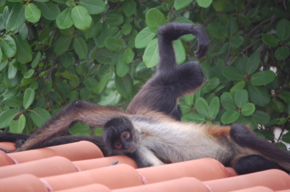 Monkey yoga?